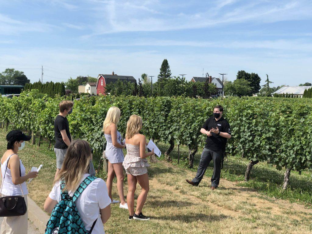 niagara toronto tours gallery wine testing 6